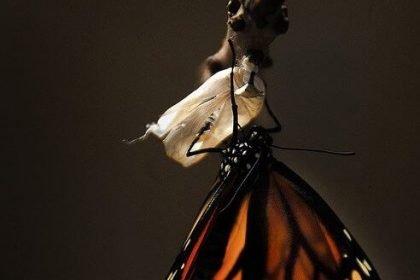 transformational coaching butterfly