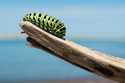transforming caterpillar - new year new me